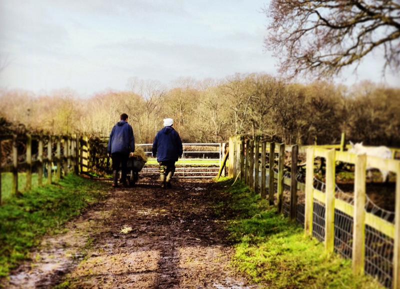 Education, Farm Visits, Market Harborough Leicestershire